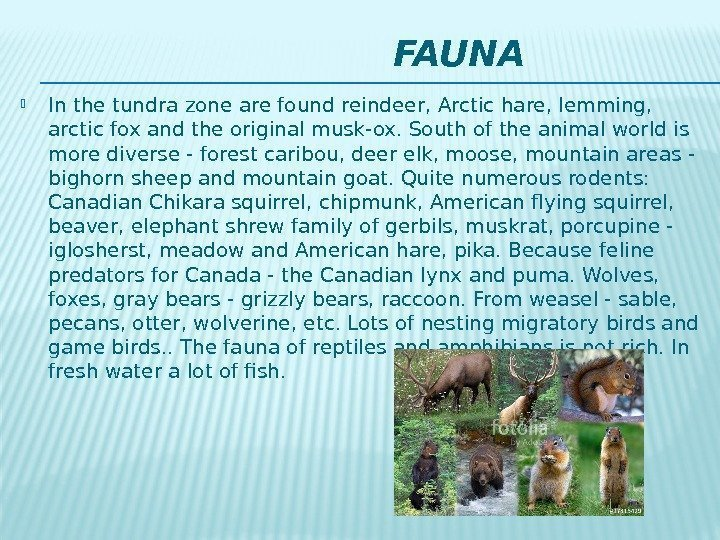 FAUNA In the tundra zone are found reindeer, Arctic