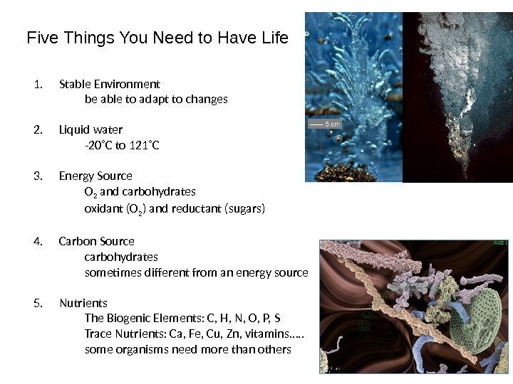 Five Things You Need to Have Life 1. Stable Environment be able to adapt