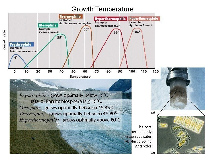 Growth Temperature Psychrophile - grows optimally below 15˚C  80 of Earth's biosphere is