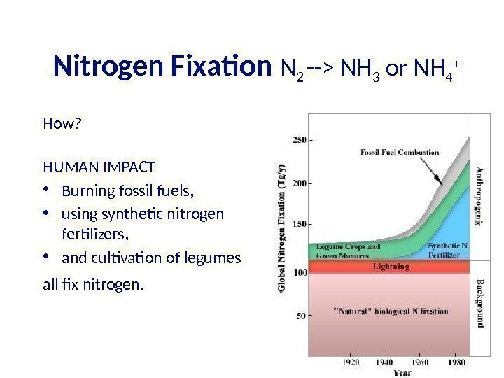 Nitrogen Fixation N 2 -- NH 3 or NH 4 + How? HUMAN IMPACT