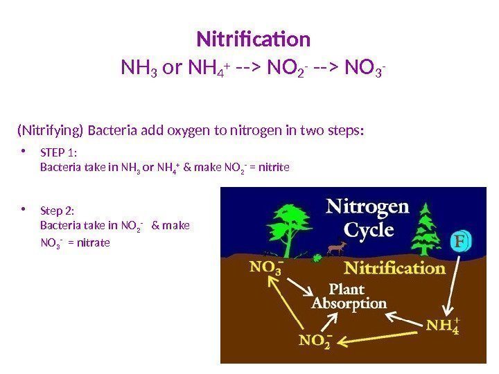 Nitrification  NH 3 or NH 4 +  -- NO 2 - --