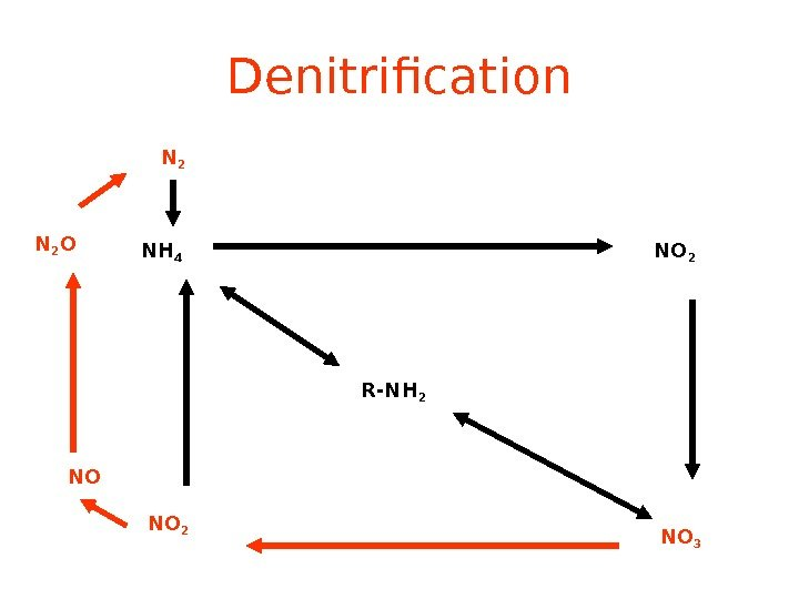 Denitrification R-NH 2 NH 4 NO 2 NO 3 NO 2 NON 2 O