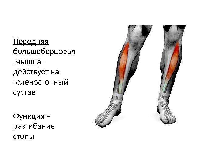 Что делать при боли в мышцах ног 100