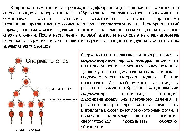 hlorgeksidin-razrushaet-spermatozoidi