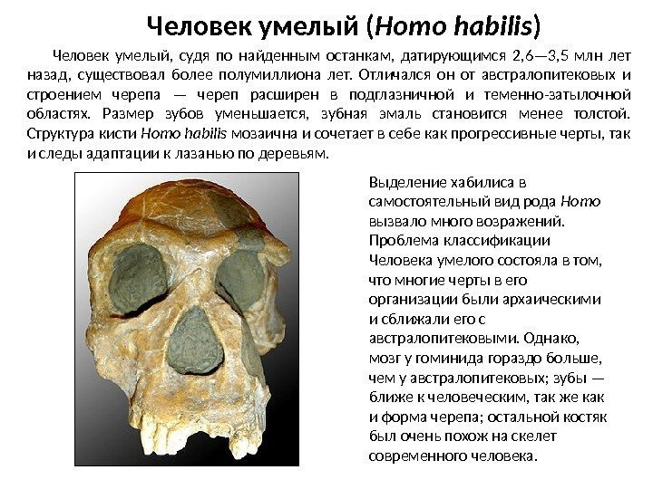 homo habilis Homo habilis the earliest of our ancestors to show a significant increase in brain size and also the first to be found associated with stone tools.