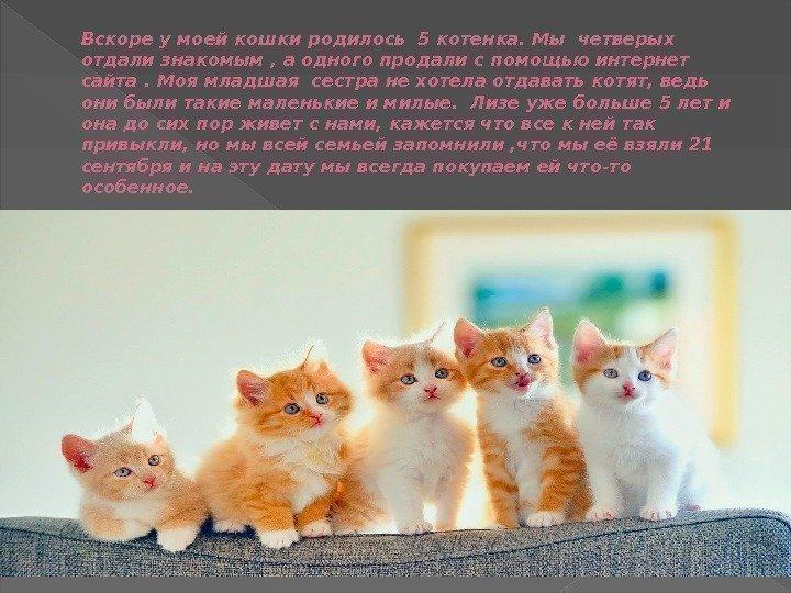 ежики к чему снятся котята и кошка многие них