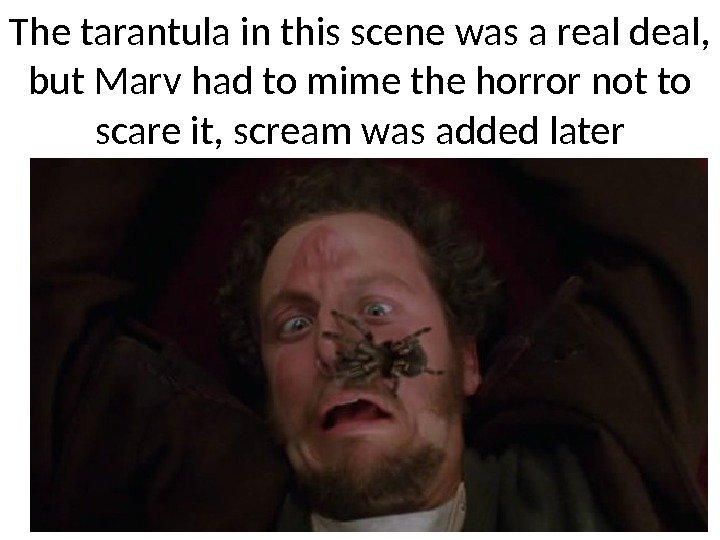 The tarantula in this scene was a real deal,  but Marv had to
