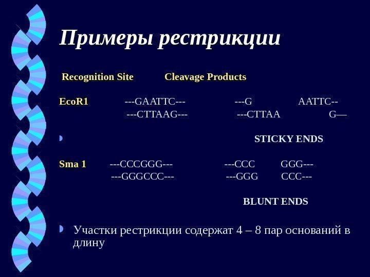 Примеры рестрикции  Recognition Site  Cleavage Products Eco. R 1