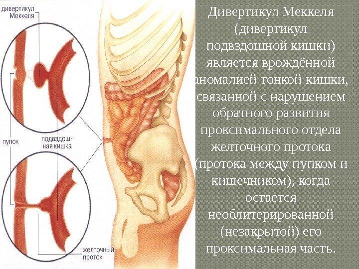Как пупок связан с кишечником