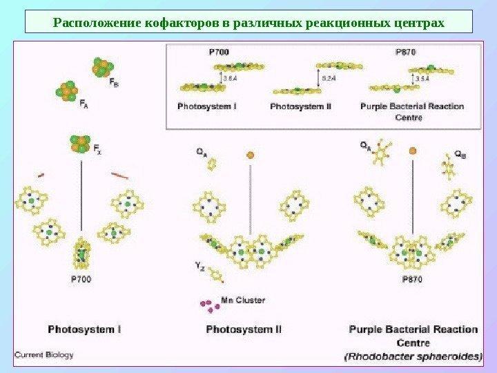 Что делает хлорофилл