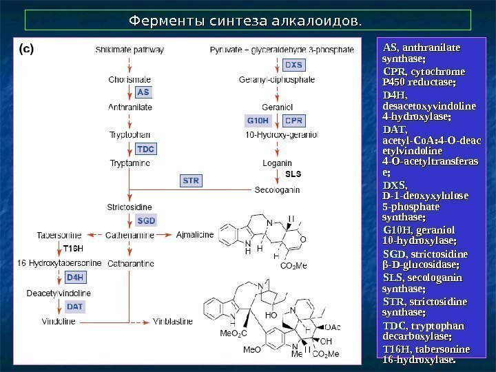 Ферменты синтеза алкалоидов.  AS,  anthranilate synthase;  CPRCPR , cytochrome P