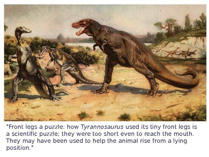 Front legs a puzzle: how Tyrannosaurus used its tiny front legs is a scientific