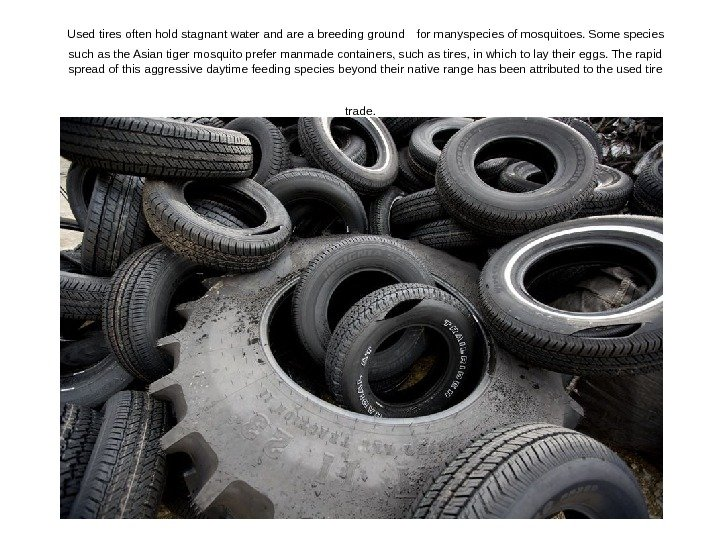 Used tires often hold stagnant water and are a breeding ground