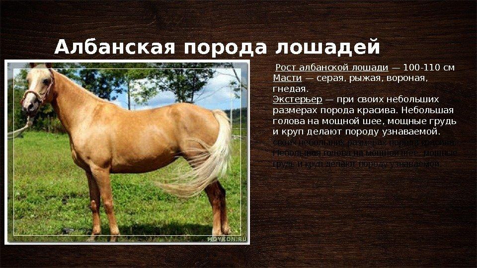 Породы лошадей фото с названиями по алфавиту