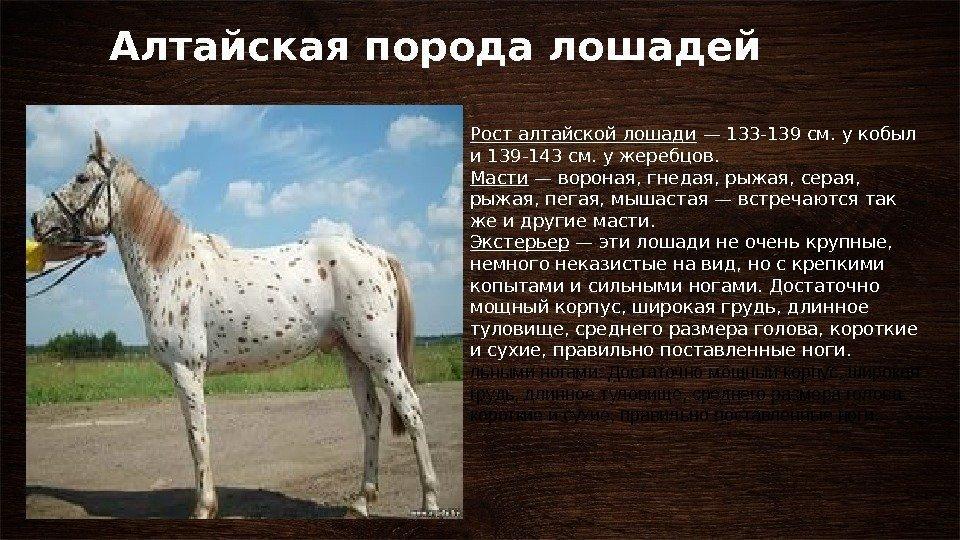 становится картинки с описанием пород лошадей авторские