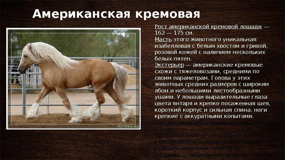 общественно-деловой центр картинки слайды о лошадях его кисти принадлежит