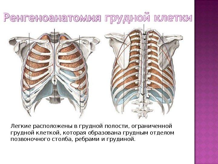 Беременна боль в грудной клетке