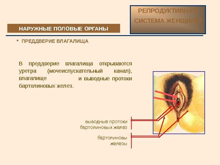 kondilomi-slizistoy-vlagalisha