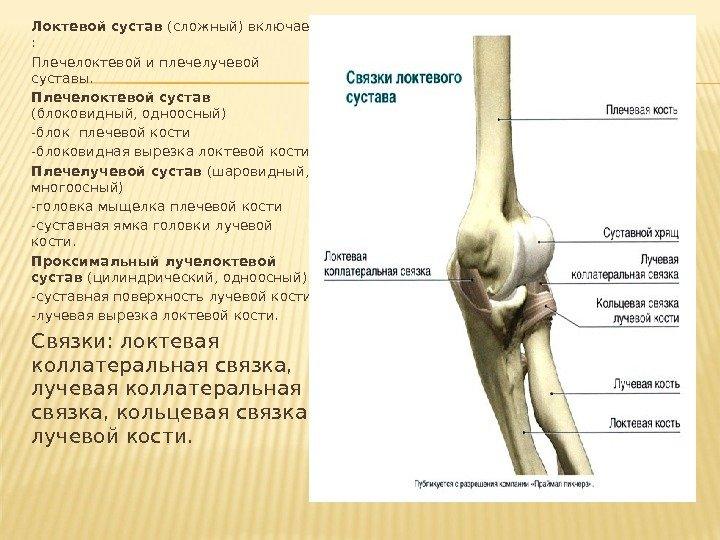Болят локтевые кости что делать