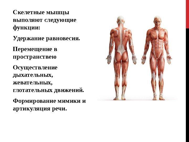 скелетные мышцы выполняют функции платить долги судебным