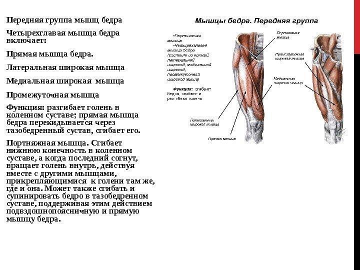 позоизометрическая гимнастика четырехглавой мышцы бедра