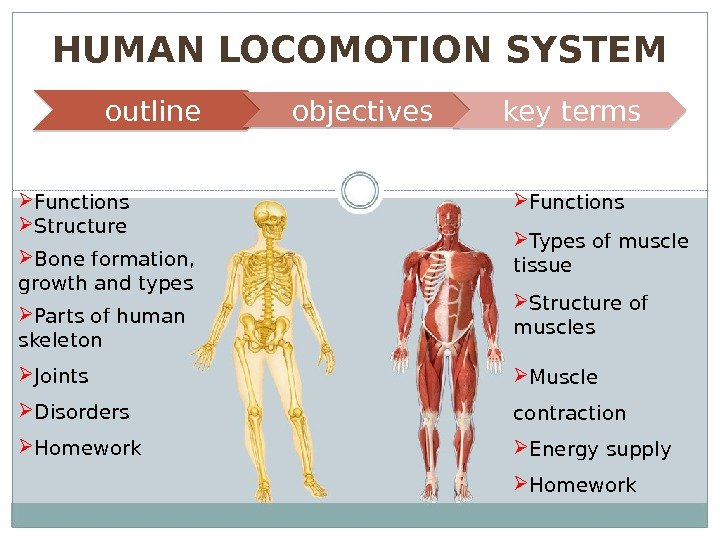 HUMAN LOCOMOTION SYSTEM outline objectives key terms SKELETAL
