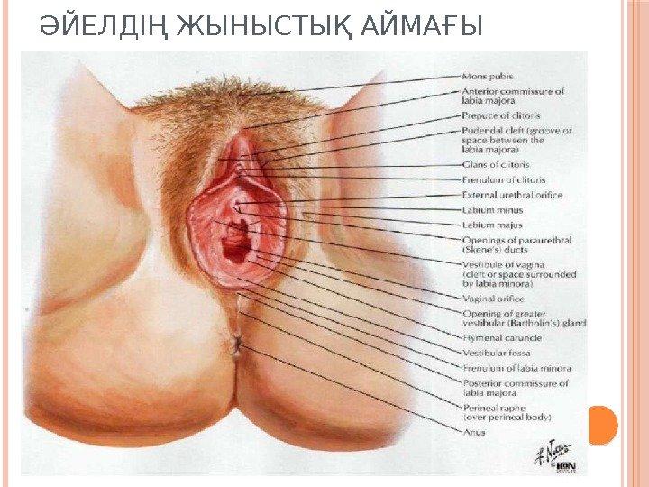 при занятием секса у женщины болит внутри-щт1