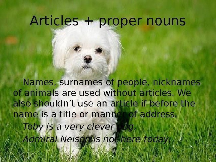 Articles + proper nouns Names, surnames of people, nicknames of animals are used without