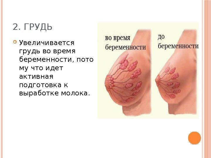 Происходит грудью ранних сроках беременности
