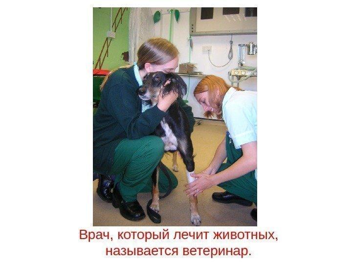 врач лечащий от паразитов