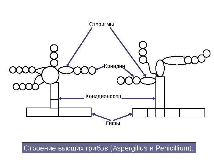 паразиты в живом организме примеры