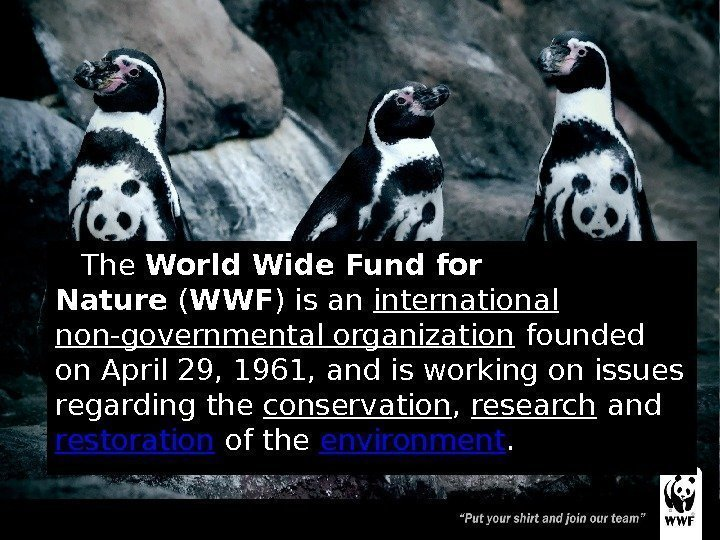world wide fund for nature wwf essay The world conservation union is an international non-governmental organization which was but it was renamed as world wide fund for nature in 1986 ad its headquarters is in switzerland the wwf is an important organization in the field of conservation of nature it is trying to protect rare.