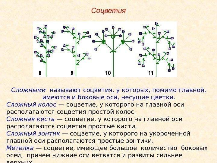 15 сложные- на главной оси располагаются не одиночные цветки, а простые соцветия сложный кисть (метёлка) (сирень