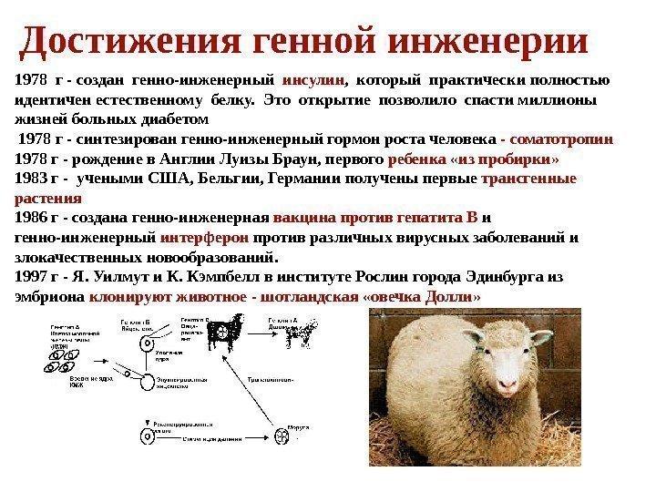 Мкртчян евгения белгород фото довольно