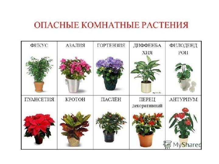 Виды все домашних цветов