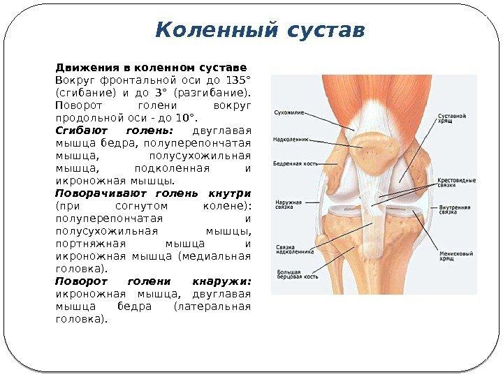 Болит коленный сустав диагнозы