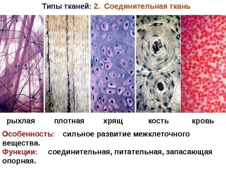 Все виды тканей с фото и названием биология
