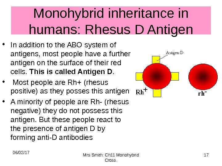 Monohybrid inheritance in humans: Rhesus D Antigen • In addition to the ABO system