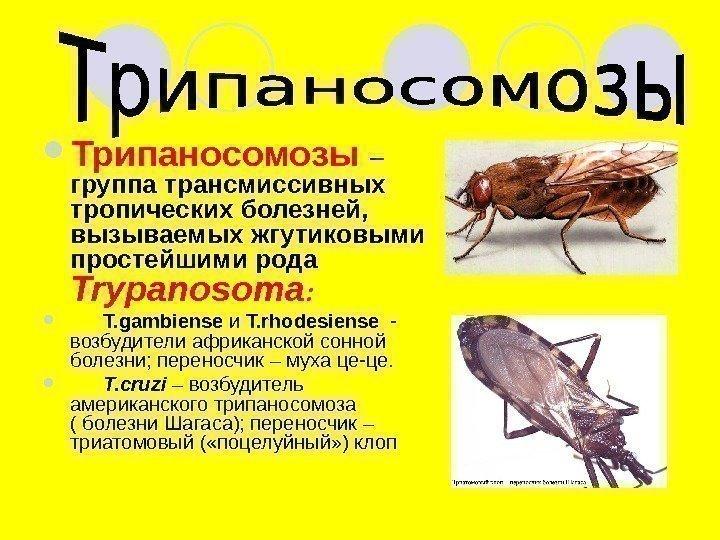 инфузории паразиты человека