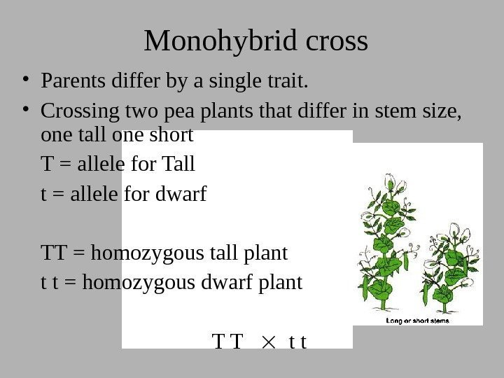 Monohybrid cross • Parents differ by a single trait.  • Crossing two pea