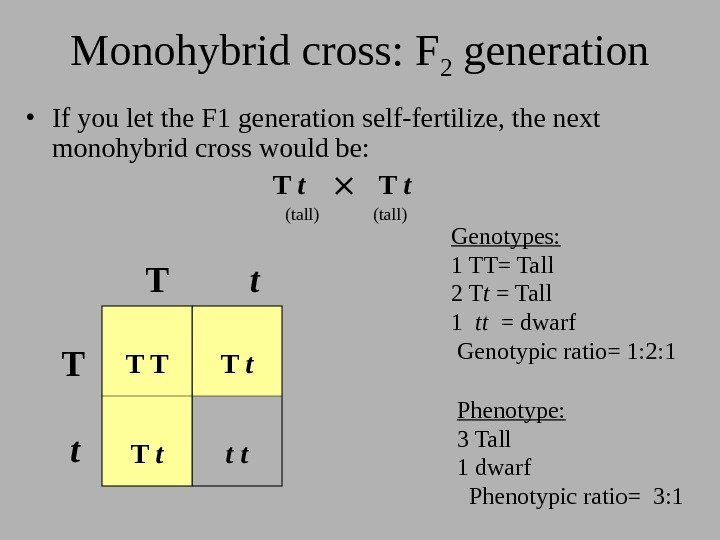 Monohybrid cross: F 2 generation • If you let the F 1 generation self-fertilize,