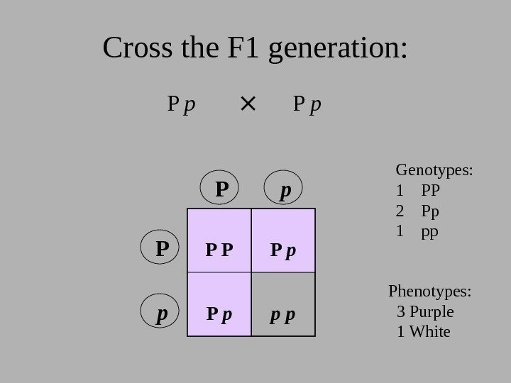 Cross the F 1 generation: P p P P P p  p p