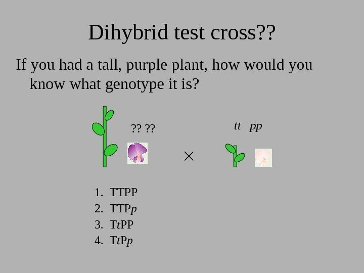 Dihybrid test cross? ? If you had a tall, purple plant, how would you