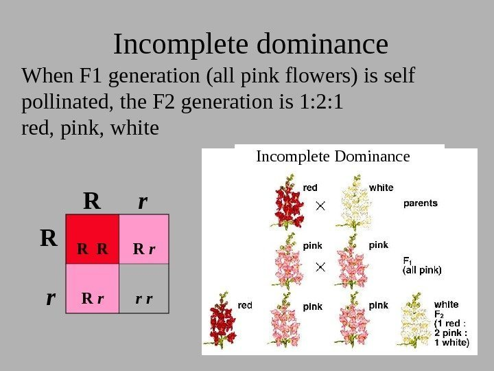 Incomplete dominance Incomplete Dominance When F 1 generation (all pink flowers) is self pollinated,