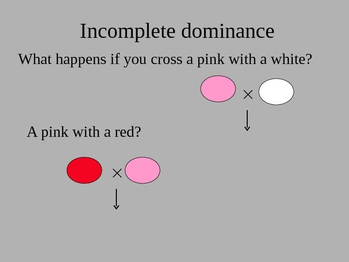 What happens if you cross a pink with a white? Incomplete dominance A pink