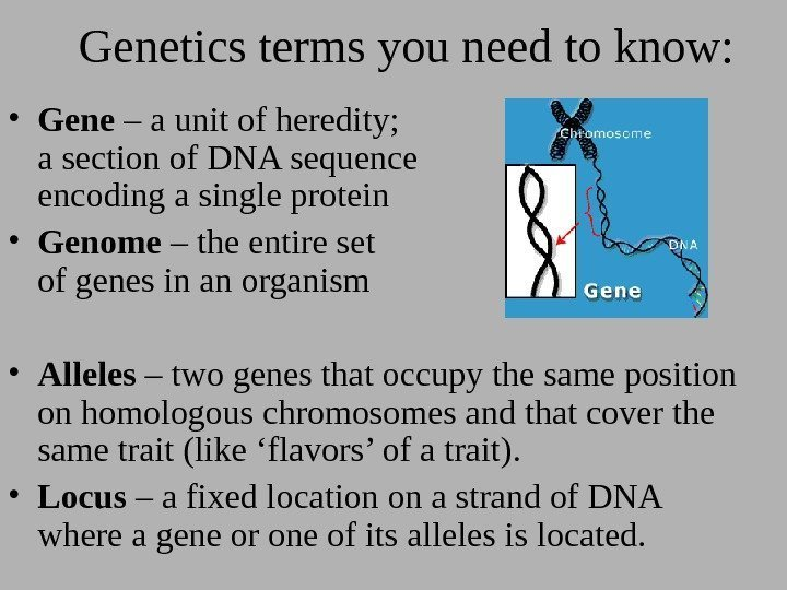 Genetics terms you need to know:  • Gene – a unit of heredity;
