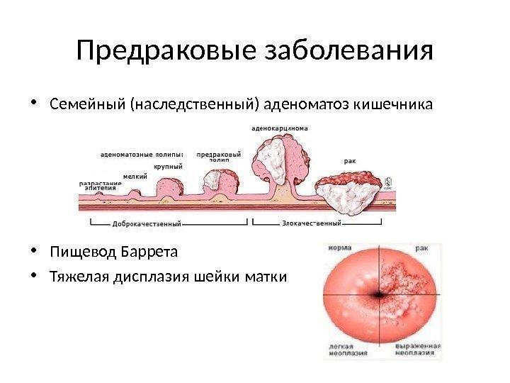 novoobrazovaniya-vo-vlagalishe