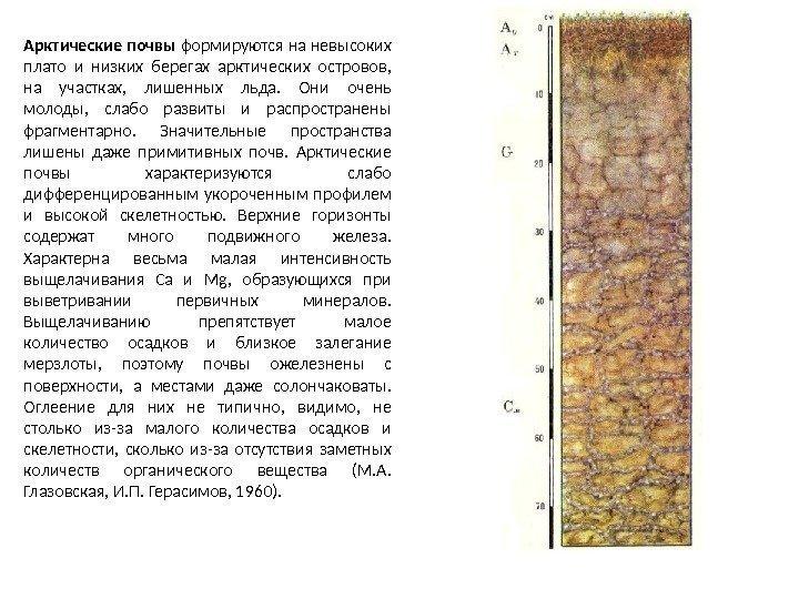 подобранный ковер почва в российской арктике где брусчатку