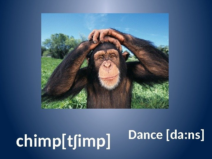 chimp[tʃimp] Dance [da: ns]