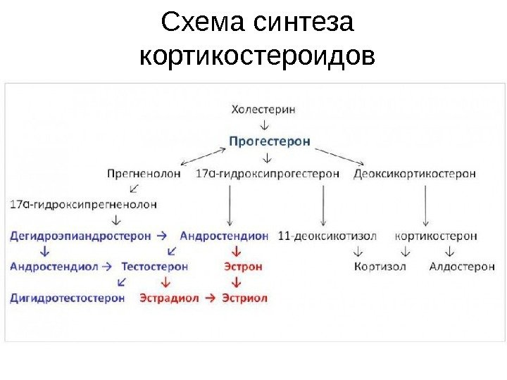 ЛЕКЦИЯ 14 Регуляторные системы организма. Биохимия